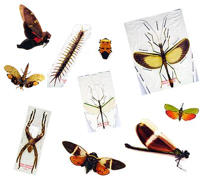 Single Specimens
