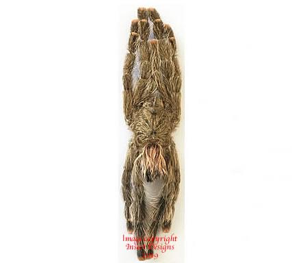 Avicularia sp. (Peru)