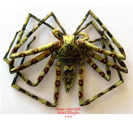 Spider sp.4 (Malaysia)