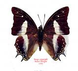 Polyura schreiber schreiber (Java)