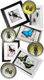 Insect Gifts