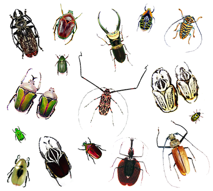 Beetles and Other Bugs