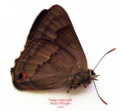 Deramas manobo (Philippines)