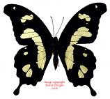 Papilio hesperus (RCA)